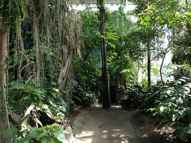 cosmocaixa forêt tropicale