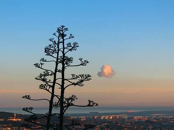carreterra de les aigues arbre et coucher de soleil