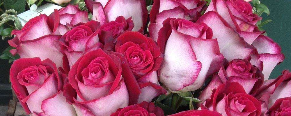 roses sant jordi