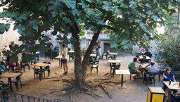 antic teatre terrasse et arbre