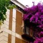 Sarria immeuble fleurs