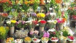 Saint Valentin à Barcelone: fleurs