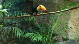 toucan au zoo de barcelone