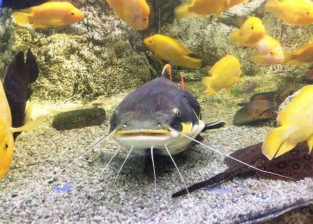 poisson tropiques aquarium