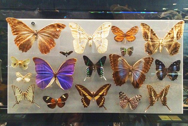 musée des sciences naturelles papillons
