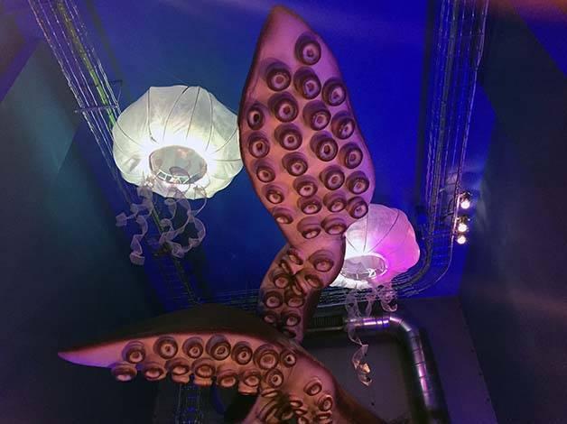 verne méduses et poulpes de la première salle