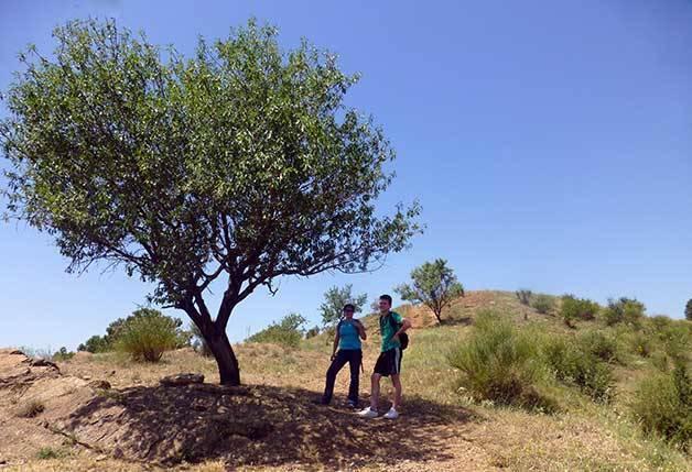 randonnée à l'ombre d'un arbre