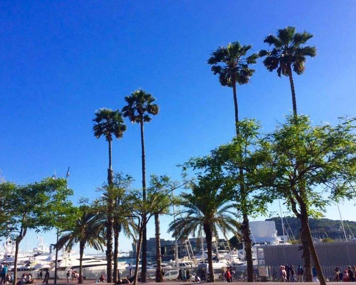 Activités à Barcelone: bons plans pour découvrir la ville