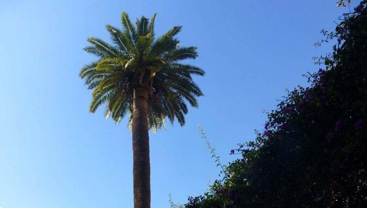 visiter Barcelone oasis de l'Eixample
